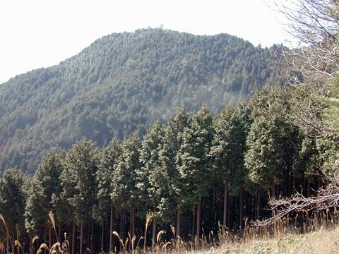 杉花粉 分かりにくいかもしれませんが,杉林から立ち上るもやは杉花粉です.春先の... 杉花粉